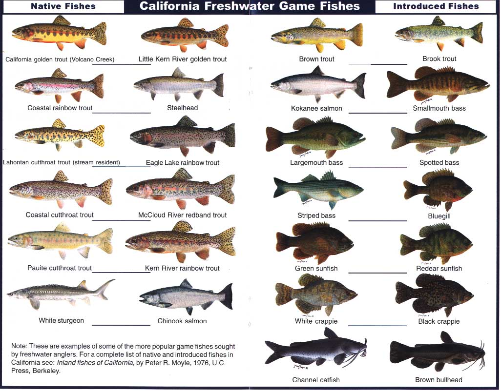 freshwater fish list to eat freshwater fish fishing